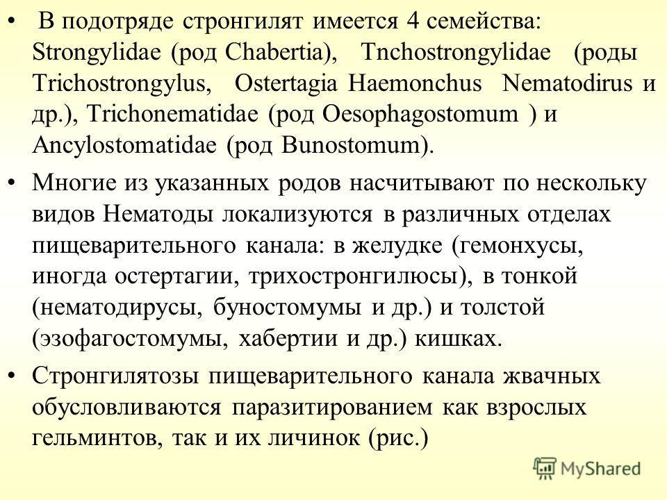 В подотряде стронгилят имеется 4 семейства: Strongylidae (род Chabertia), Tnchostrongylidae (роды Trichostrongylus, Ostertagia Haemonchus Nematodirus и др.), Trichonematidae (род Oesophagostomum ) и Ancylostomatidae (род Bunostomum). Многие из указан