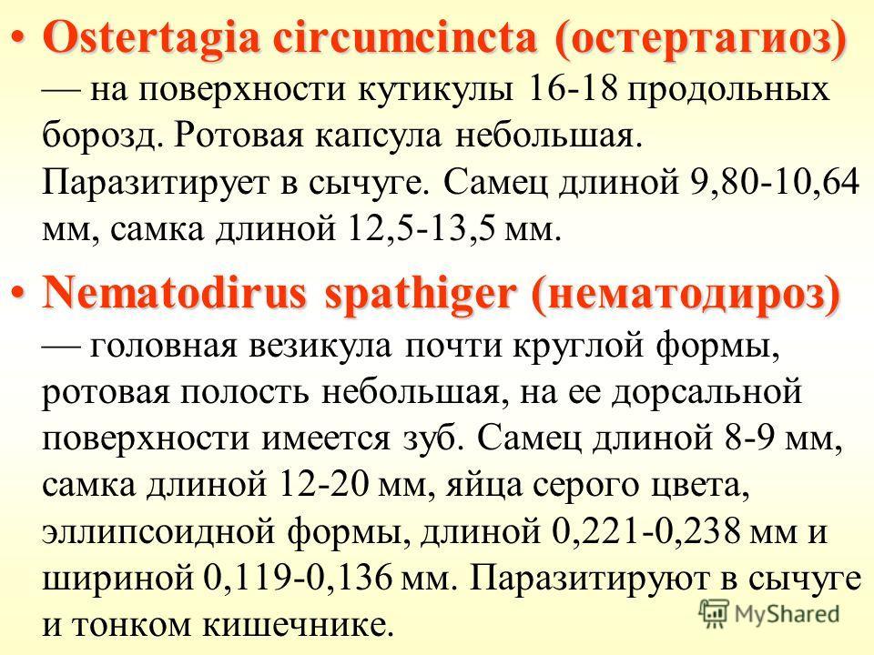 Ostertagia circumcincta (остертагиоз)Ostertagia circumcincta (остертагиоз) на поверхности кутикулы 16-18 продольных борозд. Ротовая капсула небольшая. Паразитирует в сычуге. Самец длиной 9,80-10,64 мм, самка длиной 12,5-13,5 мм. Nematodirus spathiger