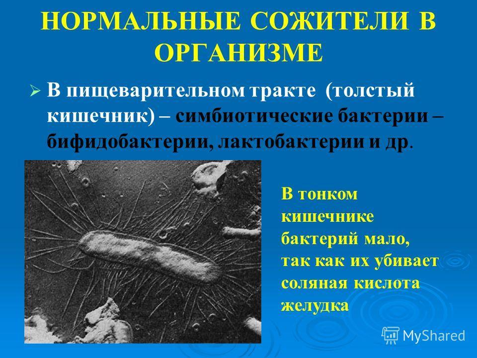 паразиты в тонком кишечнике человека