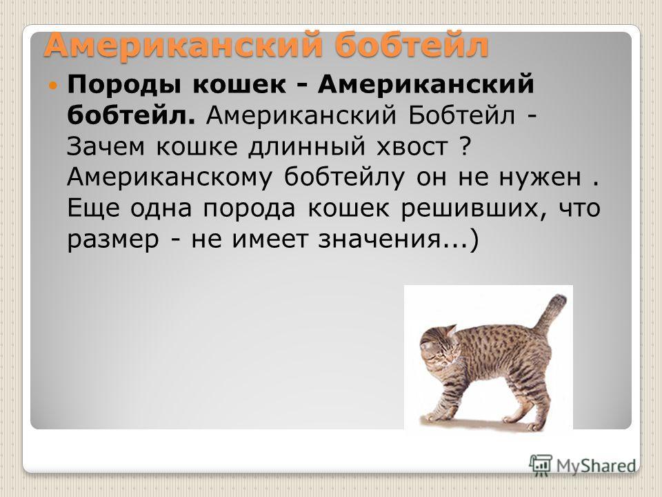 Американский бобтейл Породы кошек - Американский бобтейл. Американский Бобтейл - Зачем кошке длинный хвост ? Американскому бобтейлу он не нужен. Еще одна порода кошек решивших, что размер - не имеет значения...)