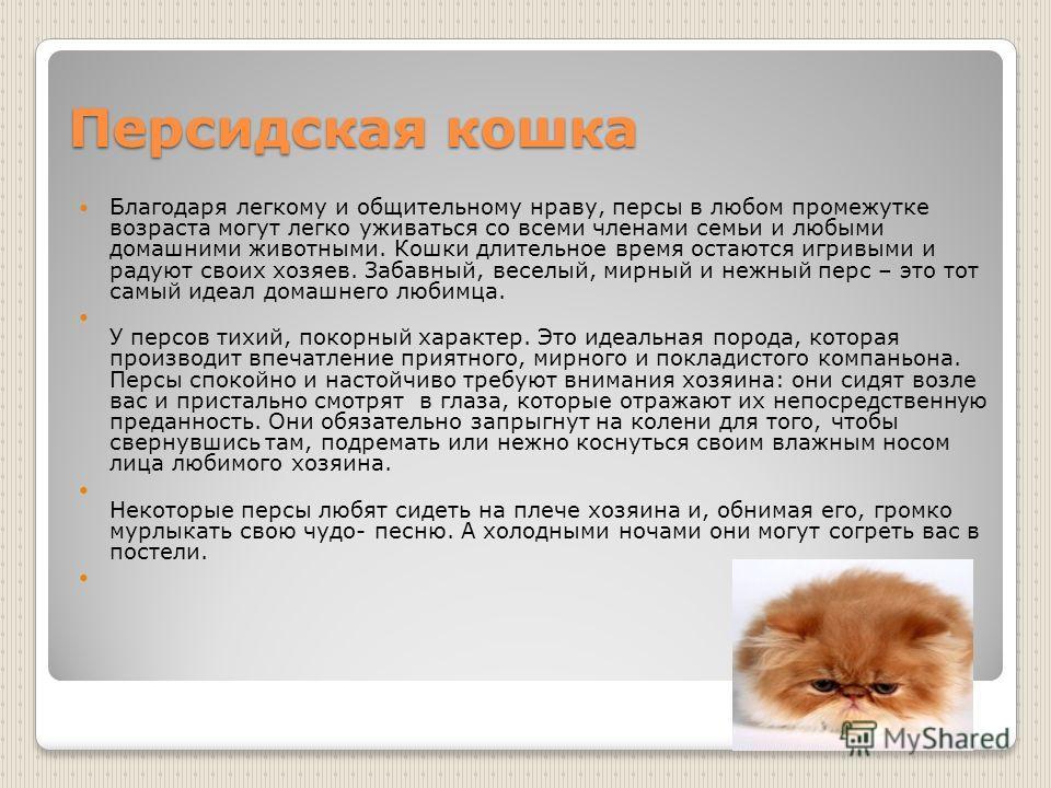 Персидская кошка Благодаря легкому и общительному нраву, персы в любом промежутке возраста могут легко уживаться со всеми членами семьи и любыми домашними животными. Кошки длительное время остаются игривыми и радуют своих хозяев. Забавный, веселый, м