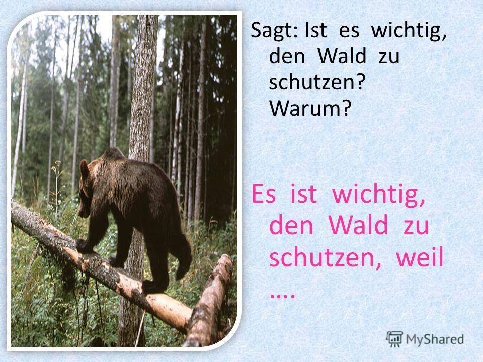 Sagt: Ist es wichtig, den Wald zu schutzen? Warum? Es ist wichtig, den Wald zu schutzen, weil ….