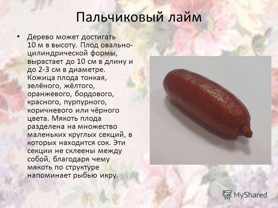 Пальчиковый лайм Дерево может достигать 10 м в высоту. Плод овально- цилиндрической формы, вырастает до 10 см в длину и до 2-3 см в диаметре. Кожица плода тонкая, зелёного, жёлтого, оранжевого, бордового, красного, пурпурного, коричневого или чёрного