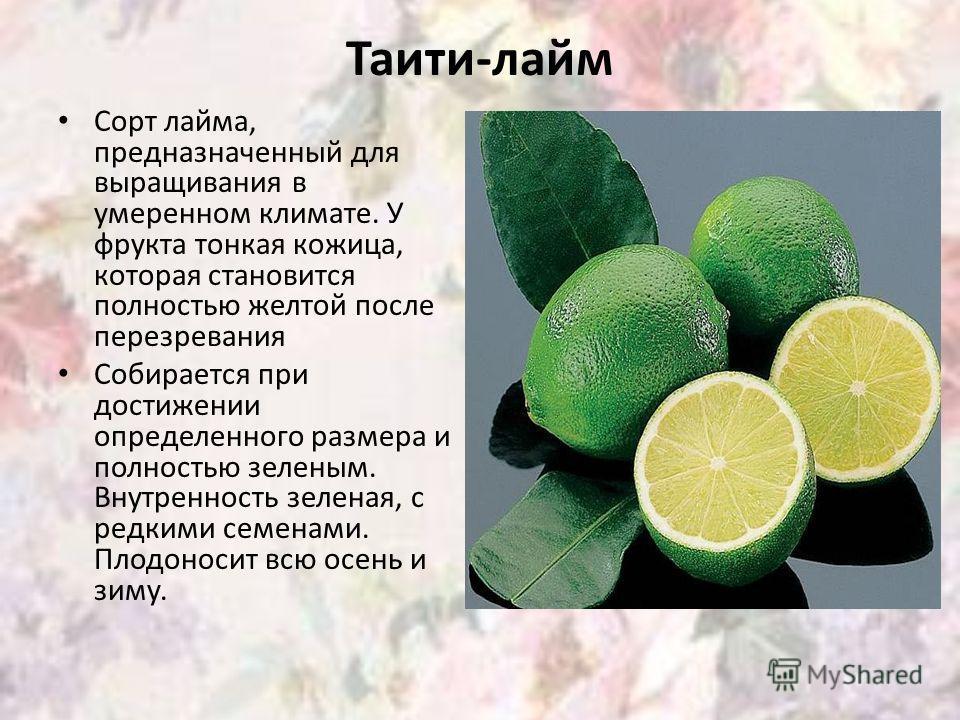 Таити-лайм Сорт лайма, предназначенный для выращивания в умеренном климате. У фрукта тонкая кожица, которая становится полностью желтой после перезревания Собирается при достижении определенного размера и полностью зеленым. Внутренность зеленая, с ре