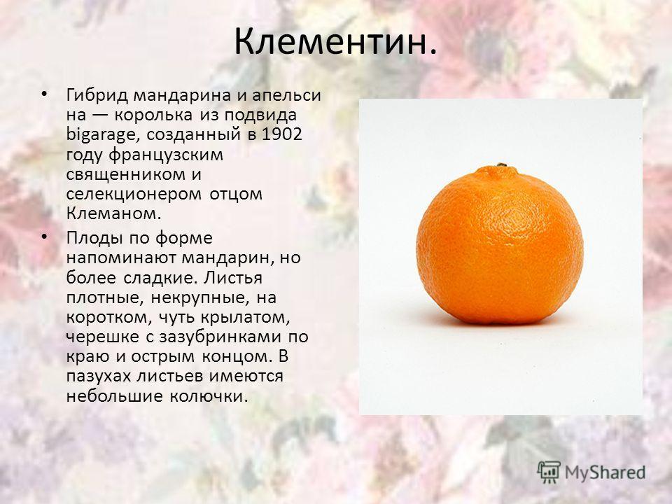 Клементин. Гибрид мандарина и апельси на королька из подвида bigarage, созданный в 1902 году французским священником и селекционером отцом Клеманом. Плоды по форме напоминают мандарин, но более сладкие. Листья плотные, некрупные, на коротком, чуть кр
