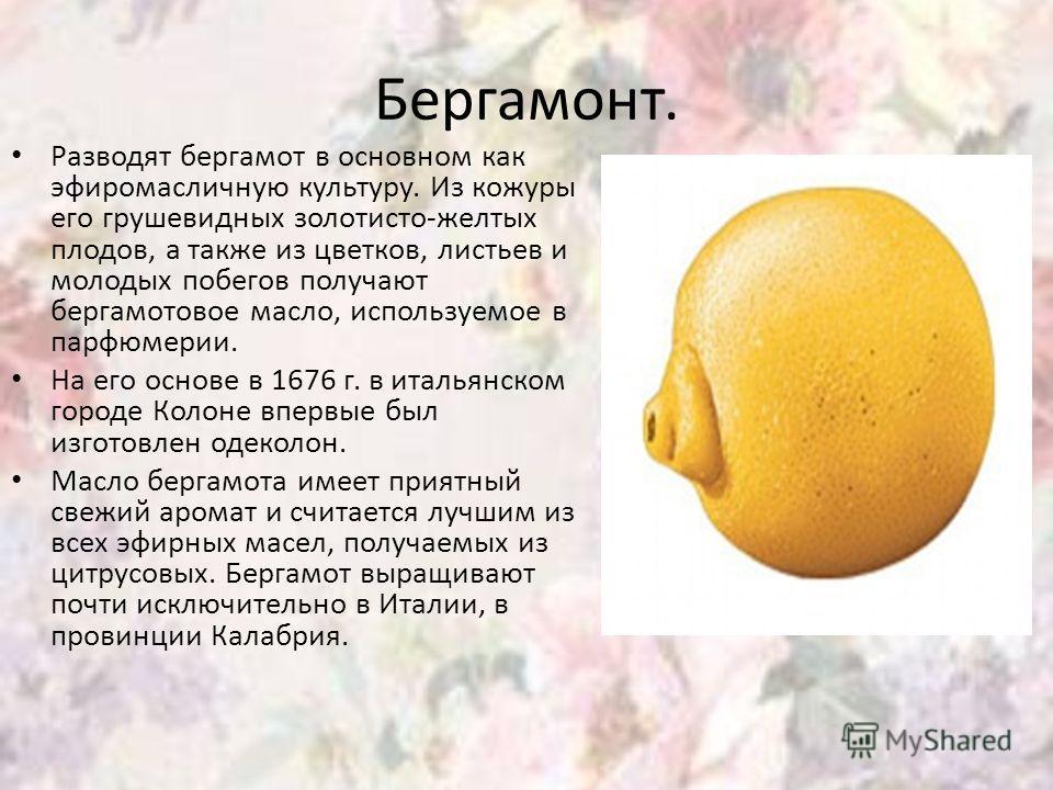 Бергамонт. Разводят бергамот в основном как эфиромасличную культуру. Из кожуры его грушевидных золотисто-желтых плодов, а также из цветков, листьев и молодых побегов получают бергамотовое масло, используемое в парфюмерии. На его основе в 1676 г. в ит