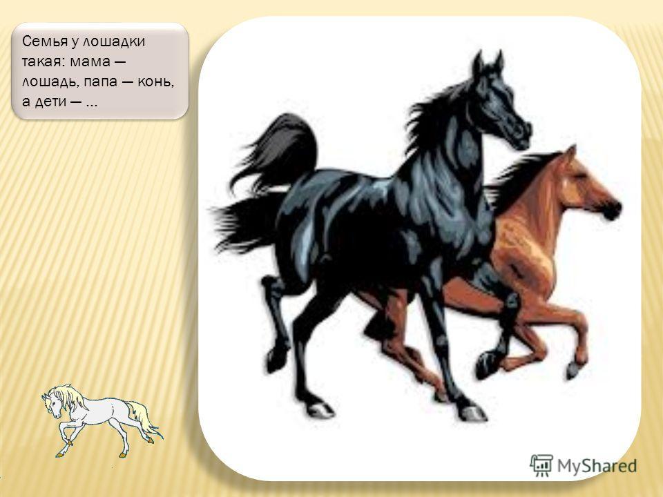 Бывают лошадки с красивыми пятнами, например, вот эта посмотри, какая красавица!