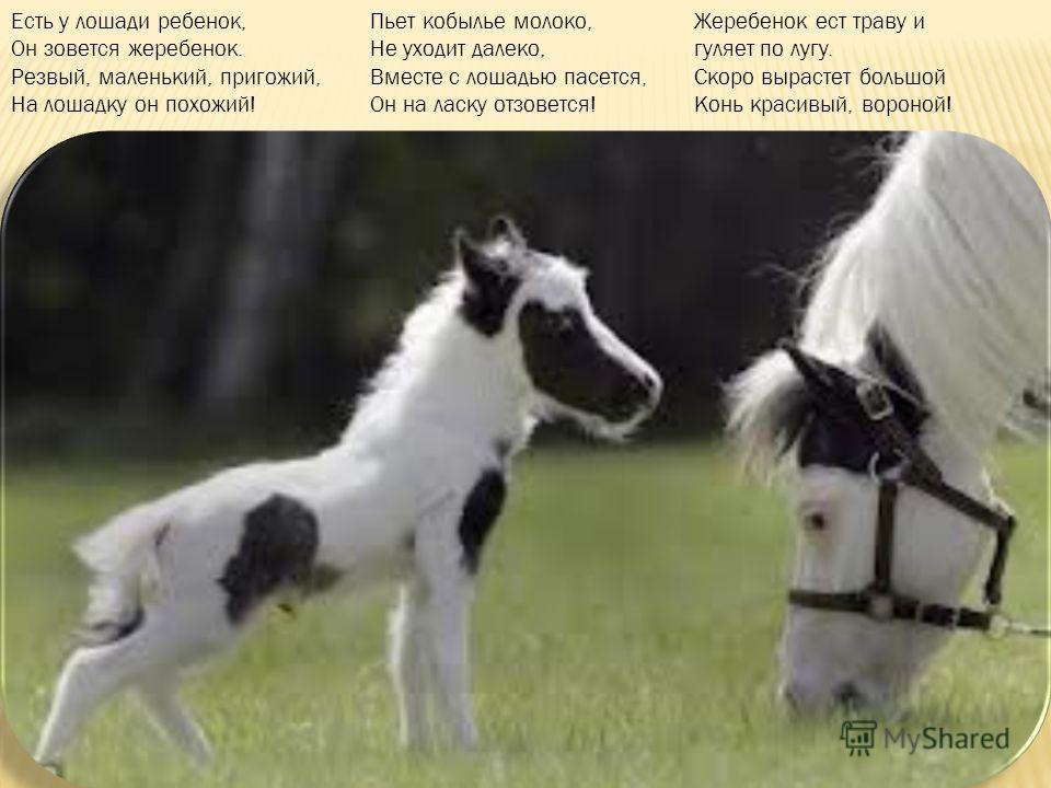 Семья у лошадки такая: мама лошадь, папа конь, а дети...