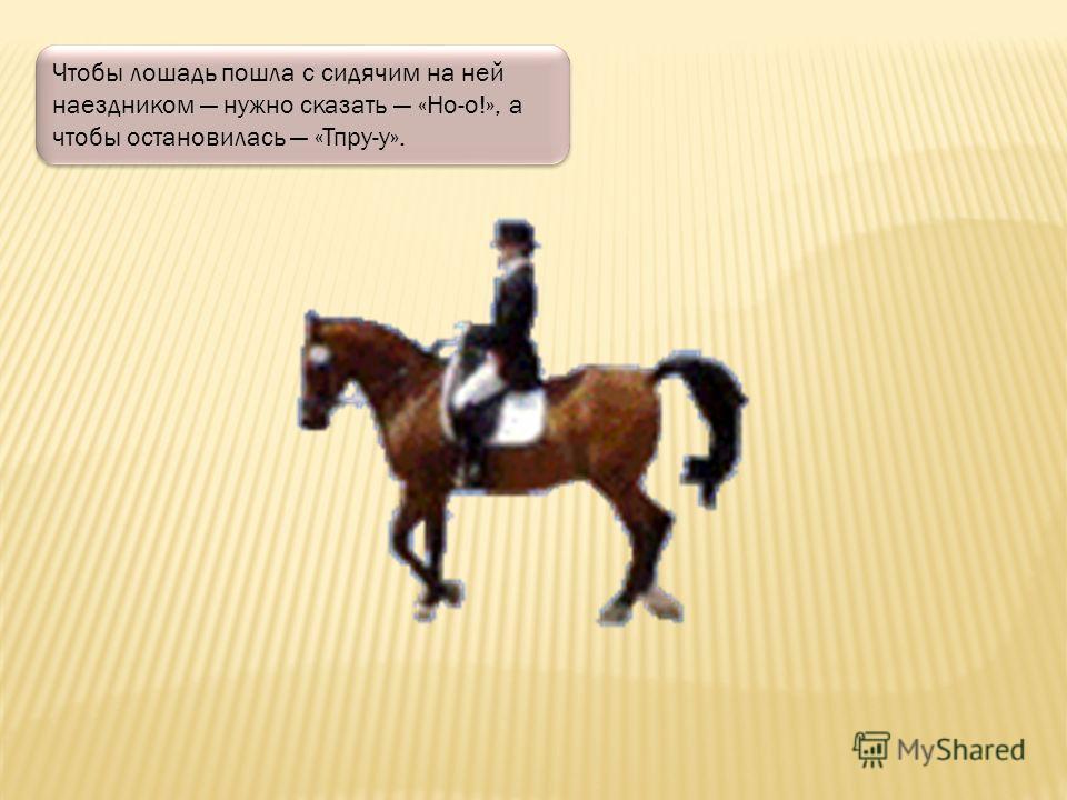 Раньше, когда автомобилей не было, лошадки служили людям и возили их на своей спине. Человек, который сидит на лошадке называется всадник или наездник.