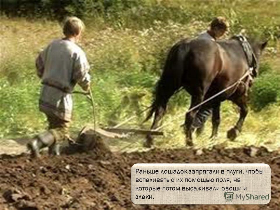 Чтобы лошадь пошла с сидячим на ней наездником нужно сказать «Но-о!», а чтобы остановилась «Тпру-у».