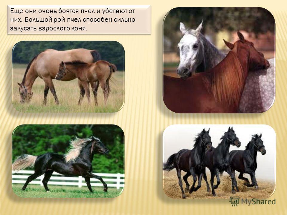 Ты тоже можешь покататься на лошади летом в парке. Лошадка добрая, она тебя не обидит. А еще, возможно, ты увидишь лошадку в цирке или на настоящей конюшне.