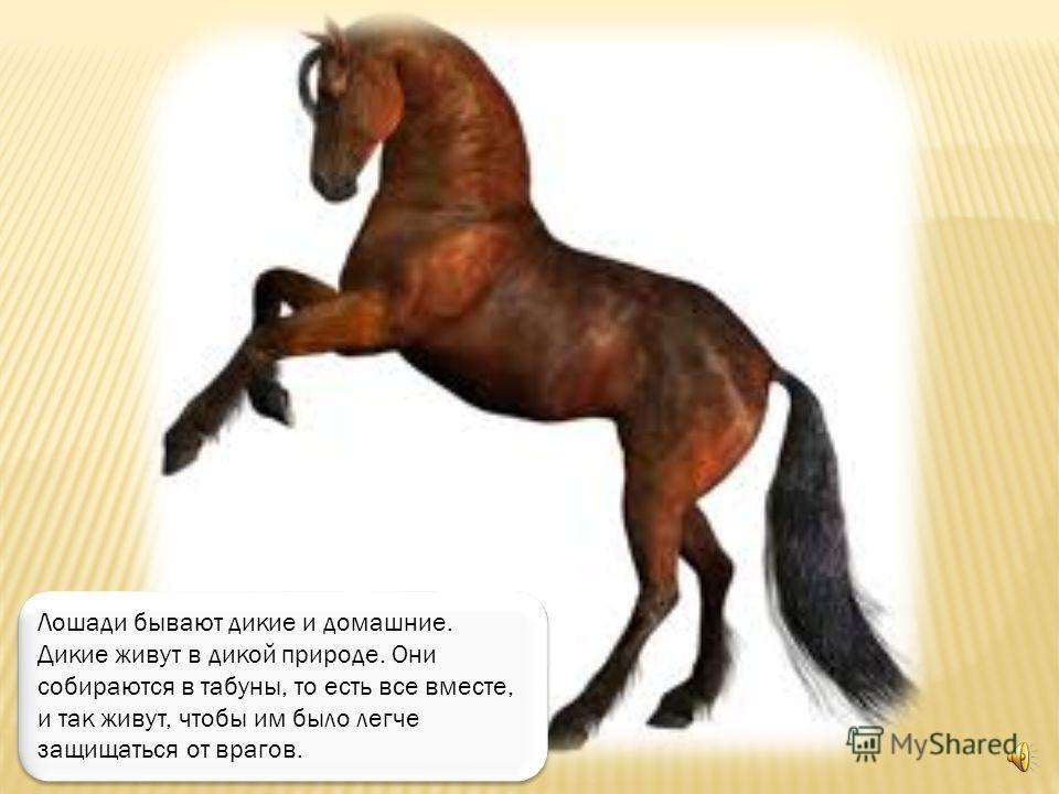 А так бежит целый табун лошадей.