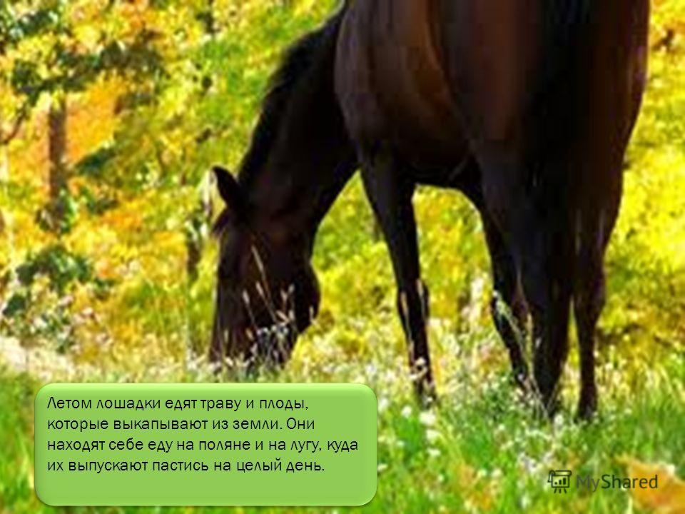 А домашние живут рядом с человеком, который строит для лошадки уютный дом. Такой дом называется конюшней.