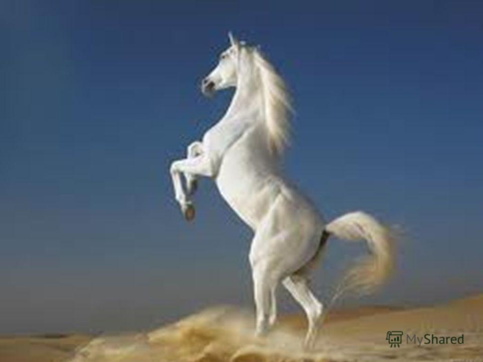 А вот так лошадки отдыхают.