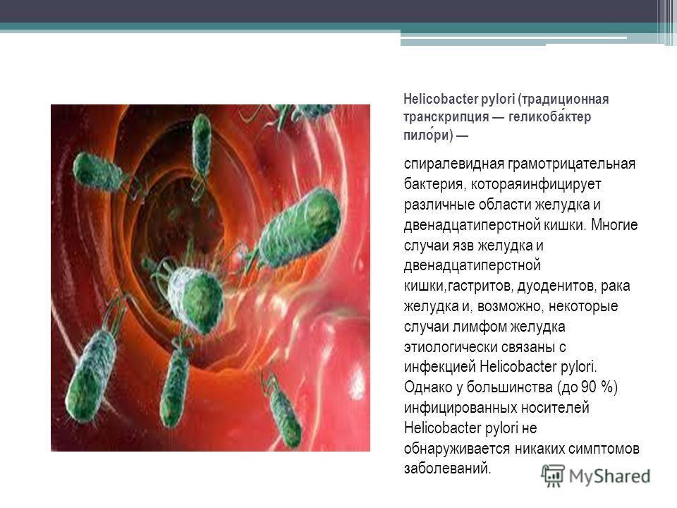 Helicobacter pylori (традиционная транскрипция геликобактер пилори) спиралевидная грамотрицательная бактерия, котораяинфицирует различные области желудка и двенадцатиперстной кишки. Многие случаи язв желудка и двенадцатиперстной кишки,гастритов, дуод