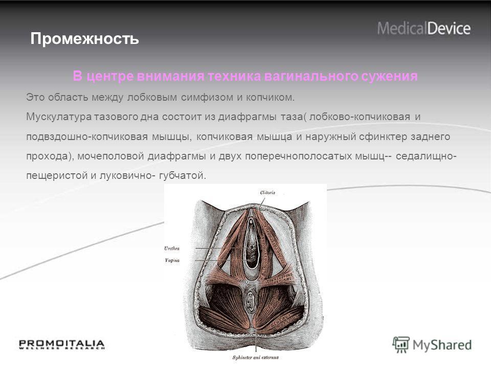 Промежность В центре внимания техника вагинального сужения Это область между лобковым симфизом и копчиком. Мускулатура тазового дна состоит из диафрагмы таза( лобково-копчиковая и подвздошно-копчиковая мышцы, копчиковая мышца и наружный сфинктер задн