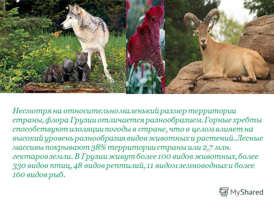 Несмотря на относительно маленький размер территории страны, флора Грузии отличается разнообразием. Горные хребты способствуют изоляции погоды в стране, что в целом влияет на высокий уровень разнообразия видов животных и растений. Лесные массивы покр