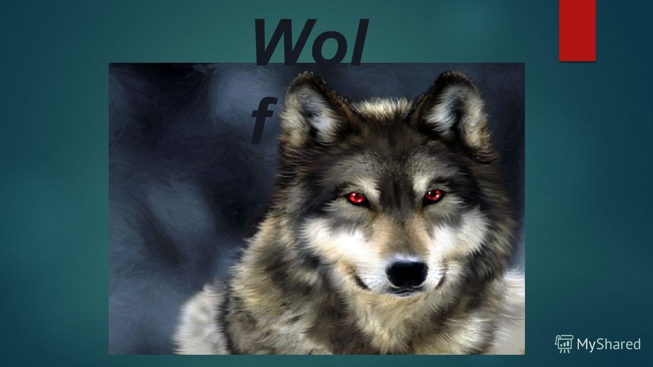 Wol f