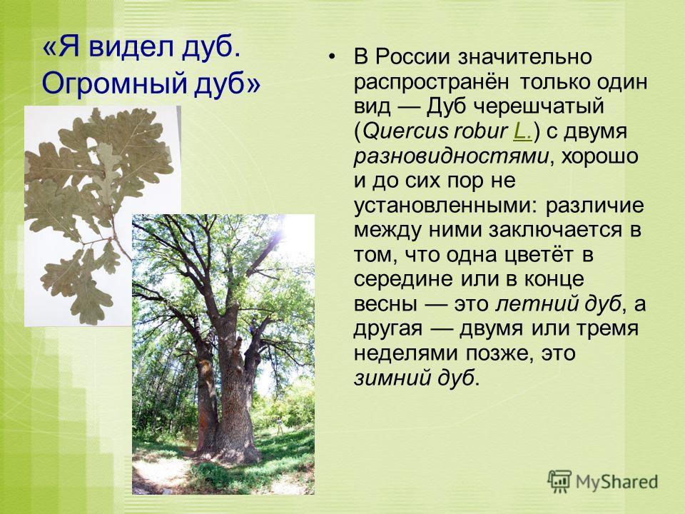 «Я видел дуб. Огромный дуб» В России значительно распространён только один вид Дуб черешчатый (Quercus robur L.) с двумя разновидностями, хорошо и до сих пор не установленными: различие между ними заключается в том, что одна цветёт в середине или в к