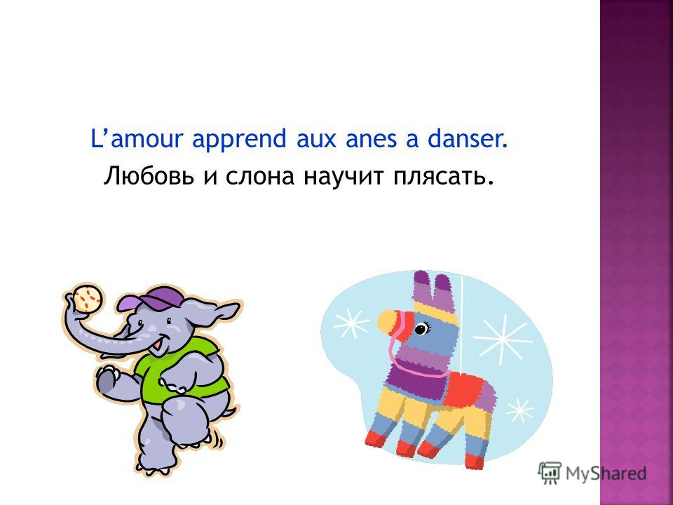 Lamour apprend aux anes a danser. Любовь и слона научит плясать.