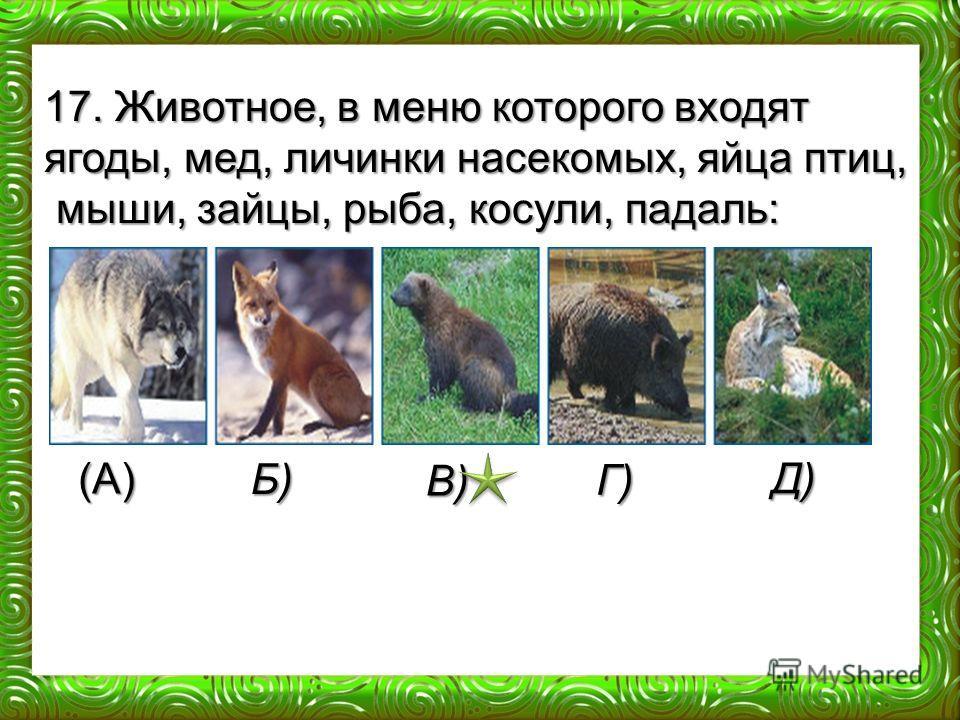 (А) Б) В) Г) Д) 17. Животное, в меню которого входят ягоды, мед, личинки насекомых, яйца птиц, мыши, зайцы, рыба, косули, падаль: мыши, зайцы, рыба, косули, падаль:
