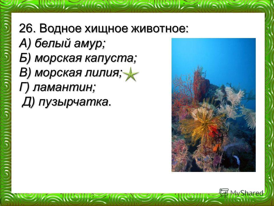 26. Водное хищное животное: А) белый амур; Б) морская капуста; В) морская лилия; Г) ламантин; Д) пузырчатка. Д) пузырчатка.