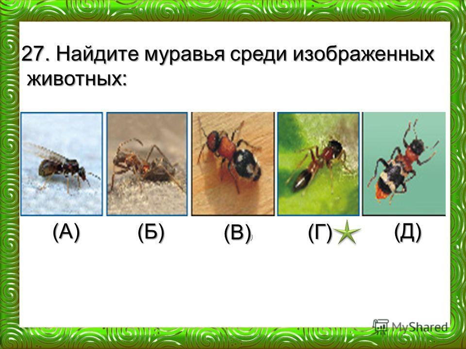 (А) (Б) (В) (В) ) (Г) (Д) 27. Найдите муравья среди изображенных животных: животных: