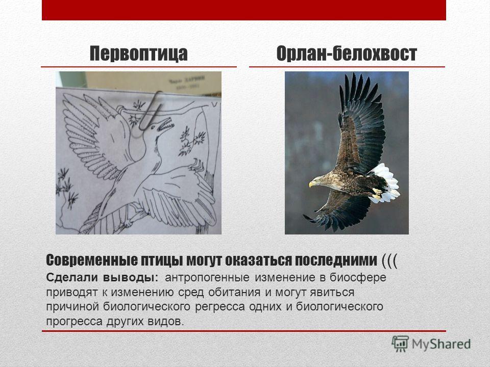 Современные птицы могут оказаться последними ((( Сделали выводы: антропогенные изменение в биосфере приводят к изменению сред обитания и могут явиться причиной биологического регресса одних и биологического прогресса других видов. ПервоптицаОрлан-бел