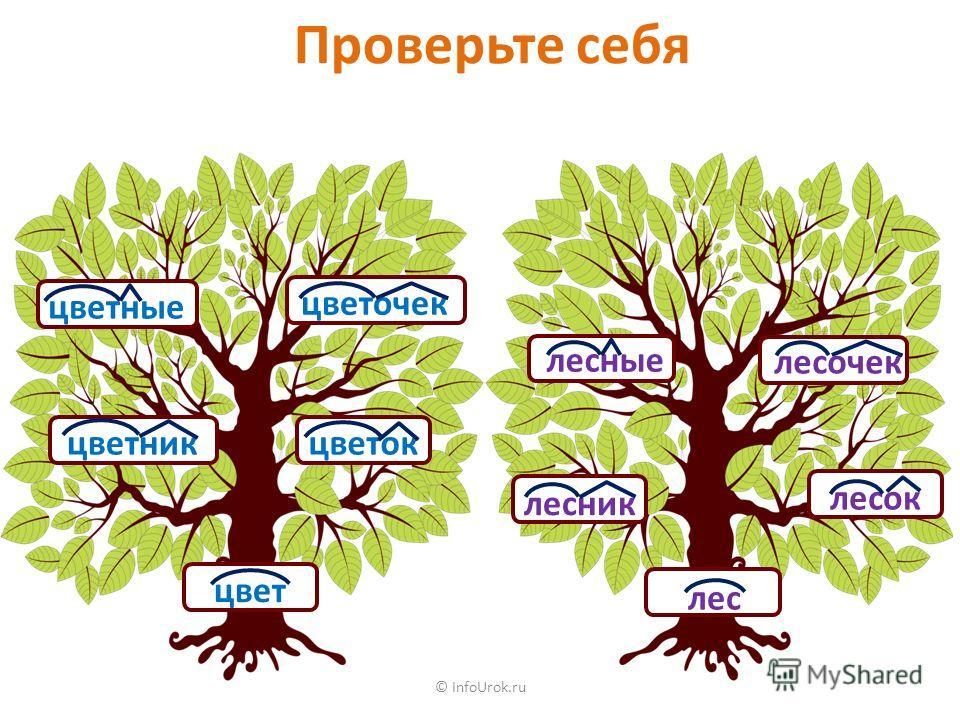 © InfoUrok.ru Проверьте себя цвет лес цветные цветочек цветокцветник лесок лесник лесные лесочек