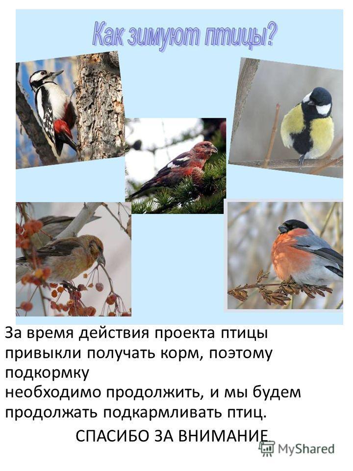 За время действия проекта птицы привыкли получать корм, поэтому подкормку необходимо продолжить, и мы будем продолжать подкармливать птиц. СПАСИБО ЗА ВНИМАНИЕ.