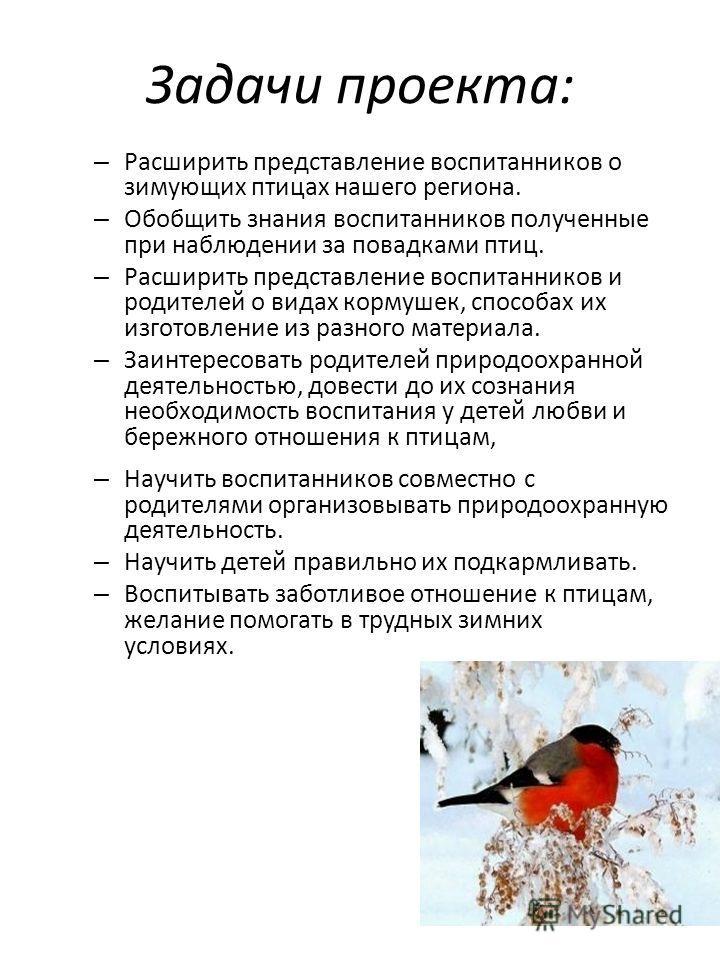 Задачи проекта: – Расширить представление воспитанников о зимующих птицах нашего региона. – Обобщить знания воспитанников полученные при наблюдении за повадками птиц. – Расширить представление воспитанников и родителей о видах кормушек, способах их и