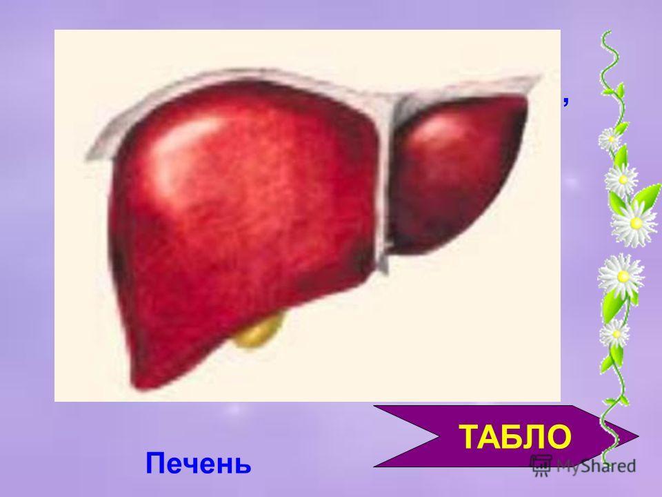 ТАБЛО А повышает сопротивляемость заболеваниям органов дыхания, сохраняет здоровыми кожу, кости, волосы, зубы и десны. С заживляет раны и ожоги, снижает уровень холестерина, предохраняет от многих вирусов и бактерий, увеличивает продолжительность жиз