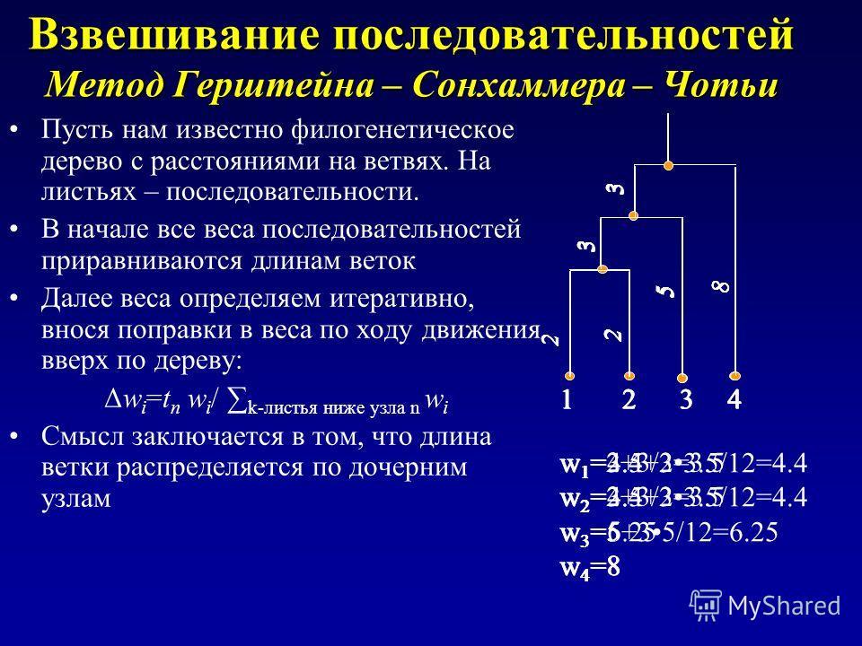 Взвешивание последовательностей Метод Герштейна – Сонхаммера – Чотьи Пусть нам известно филогенетическое дерево с расстояниями на ветвях. На листьях – последовательности. В начале все веса последовательностей приравниваются длинам веток Далее веса оп