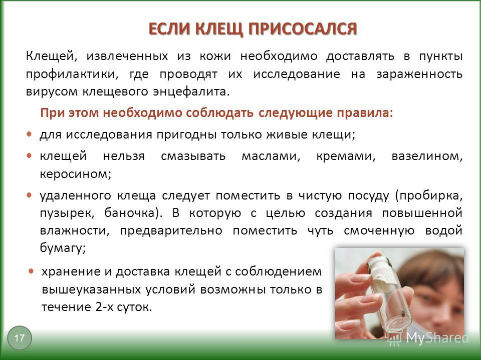 ЕСЛИ КЛЕЩ ПРИСОСАЛСЯ 17 Клещей, извлеченных из кожи необходимо доставлять в пункты профилактики, где проводят их исследование на зараженность вирусом клещевого энцефалита. При этом необходимо соблюдать следующие правила: для исследования пригодны тол