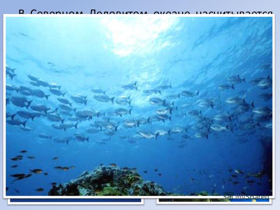 В Северном Ледовитом океане насчитывается более 150 видов рыб, среди них большое число промысловых (сельдь, тресковые, лососёвые, скорпеновые, камбаловые и другие). В последние годы из-за потепления в Арктике наблюдается увеличение поголовья тресковы