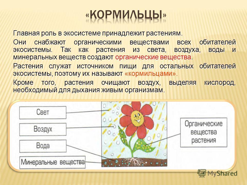 Главная роль в экосистеме принадлежит растениям. Они снабжают органическими веществами всех обитателей экосистемы. Так как растения из света, воздуха, воды и минеральных веществ создают органические вещества. Растения служат источником пищи для остал