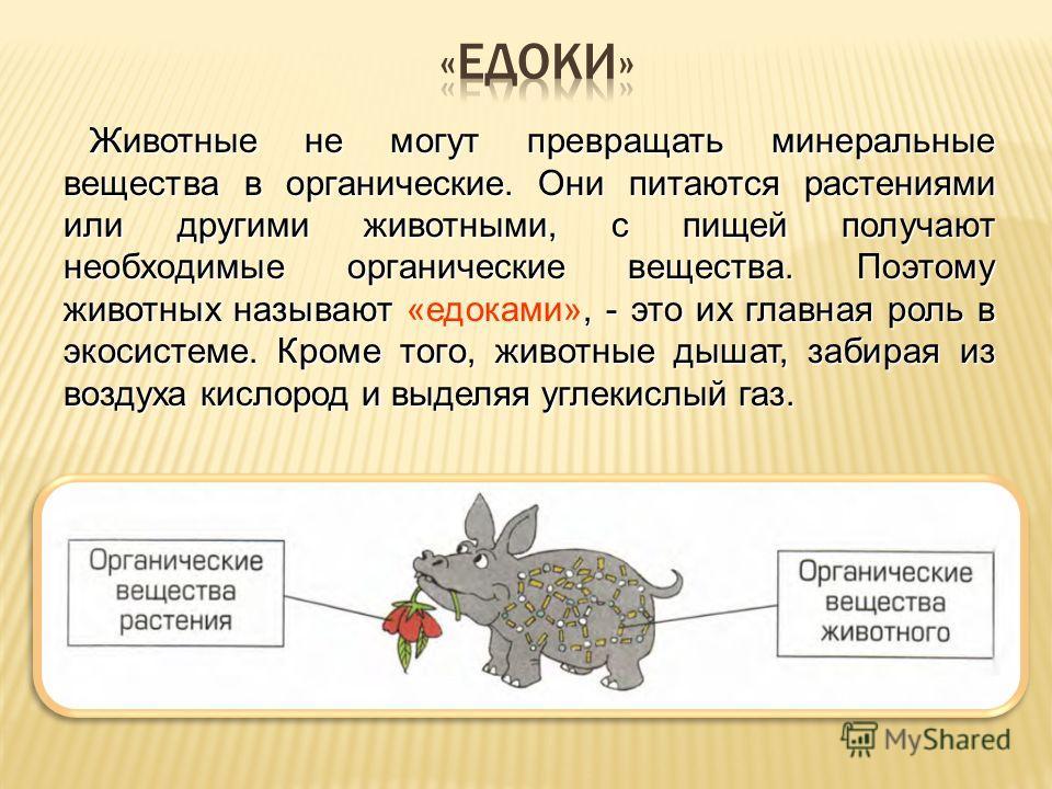 Животные не могут превращать минеральные вещества в органические. Они питаются растениями или другими животными, с пищей получают необходимые органические вещества. Поэтому животных называют, - это их главная роль в экосистеме. Кроме того, животные д