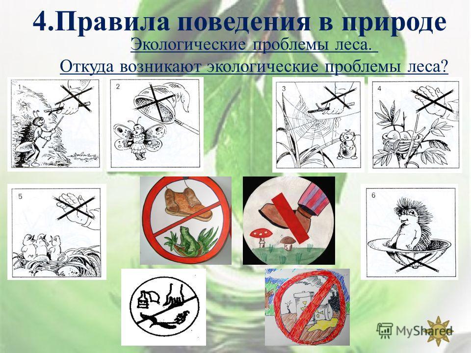 4. Правила поведения в природе Экологические проблемы леса. Откуда возникают экологические проблемы леса?