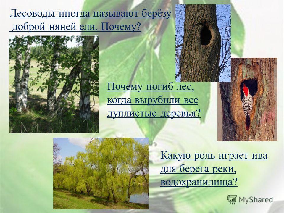 Лесоводы иногда называют берёзу доброй няней ели. Почему ? Почему погиб лес, когда вырубили все дуплистые деревья ? Какую роль играет ива для берега реки, водохранилища ?