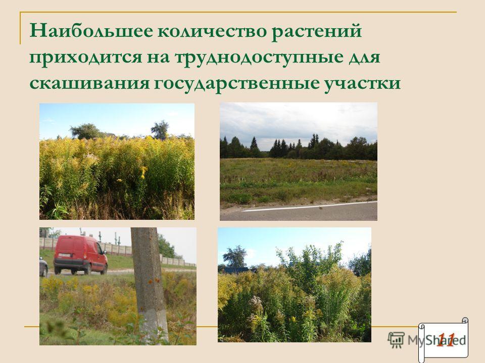 Наибольшее количество растений приходится на труднодоступные для скашивания государственные участки 11111111