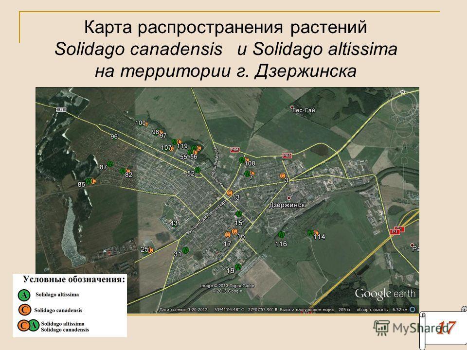 17171717 Карта распространения растений Solidago canadensis и Solidago altissima на территории г. Дзержинска