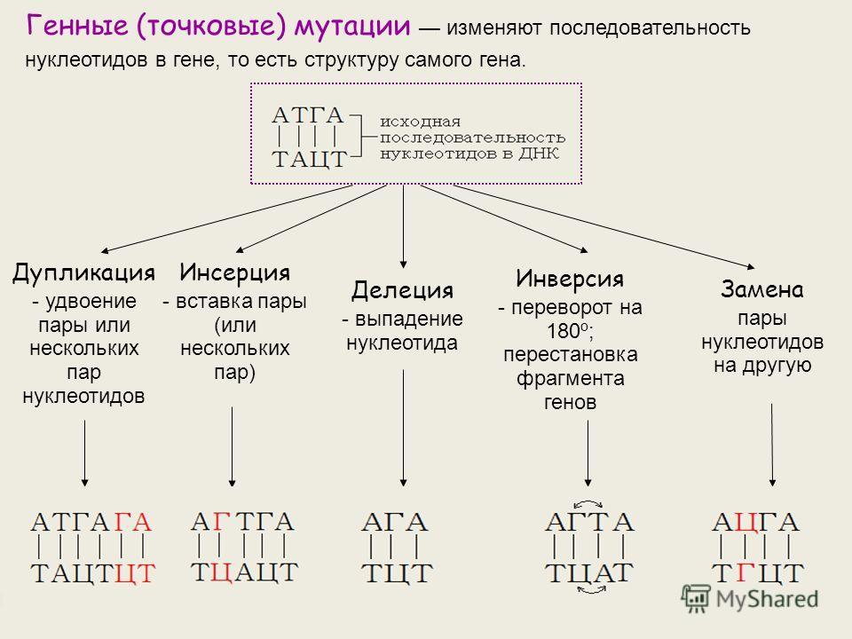 Генные (точковые) мутации изменяют последовательность нуклеотидов в гене, то есть структуру самого гена. Дупликация - удвоение пары или нескольких пар нуклеотидов Инсерция - вставка пары (или нескольких пар) Делеция - выпадение нуклеотида Инверсия -