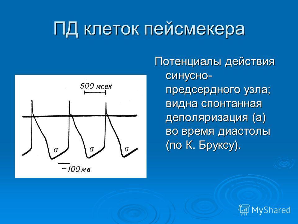 ПД клеток пейсмекера Потенциалы действия синусно- предсердного узла; видна спонтанная деполяризация (а) во время диастолы (по К. Бруксу).