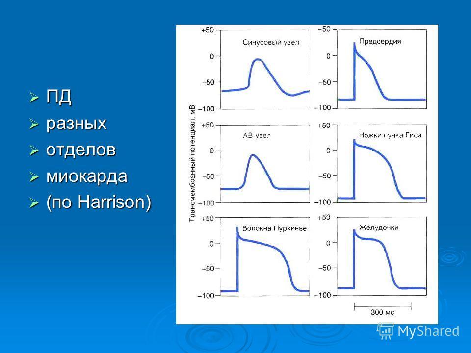ПД ПД разных разных отделов отделов миокарда миокарда (по Harrison) (по Harrison)