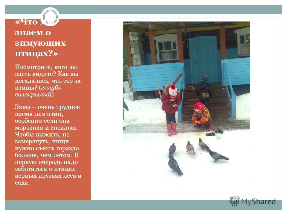 «Что мы знаем о зимующих птицах?» Посмотрите, кого вы здесь видите? Как вы догадались, что это за птицы? (голубь – сизокрылый) Зима – очень трудное время для птиц, особенно если она морозная и снежная. Чтобы выжить, не замерзнуть, пищи нужно съесть г