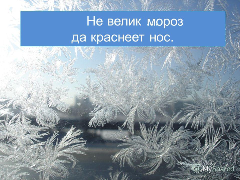Не велик … да краснеет нос. мороз