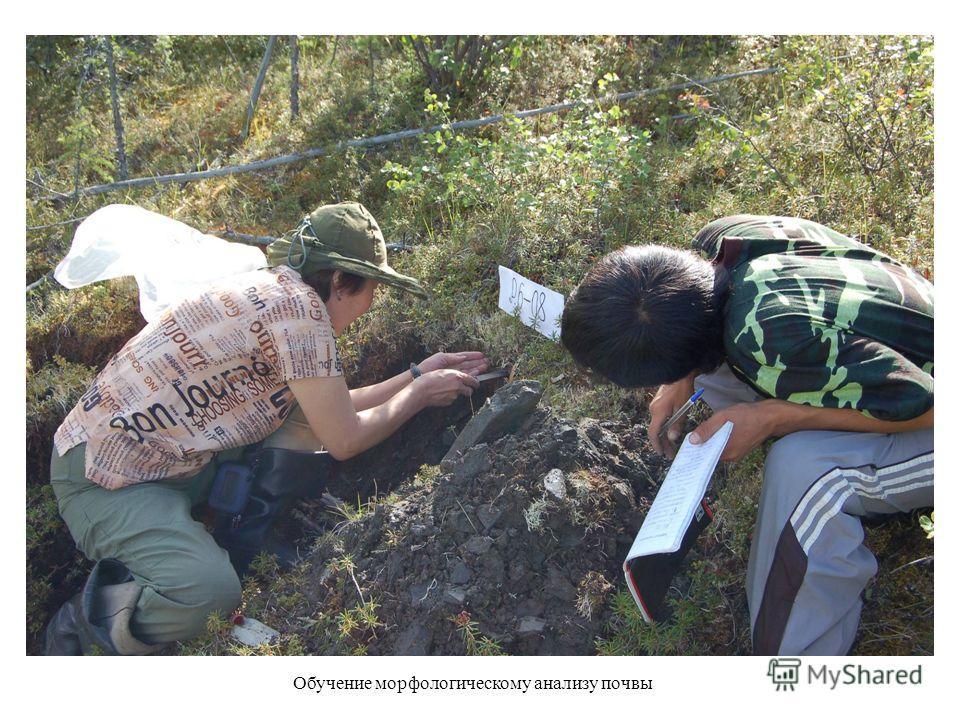 Обучение морфологическому анализу почвы