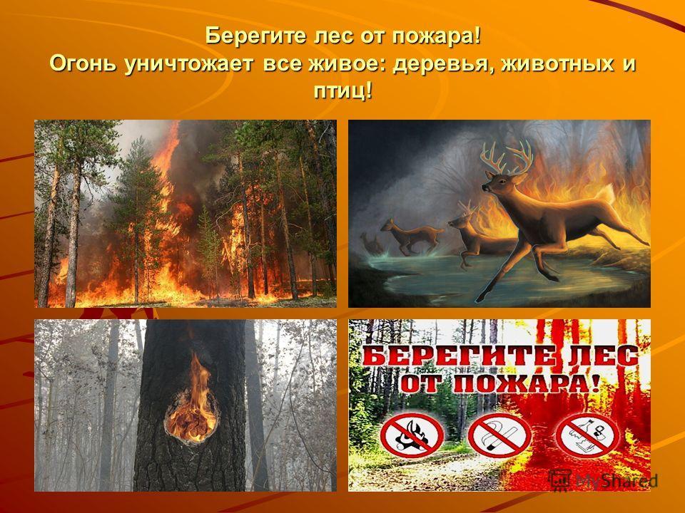 Берегите лес от пожара! Огонь уничтожает все живое: деревья, животных и птиц!