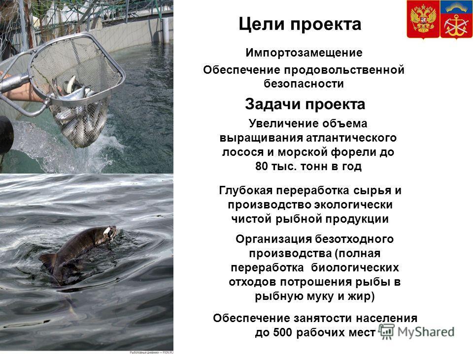 Цели проекта Задачи проекта Организация безотходного производства (полная переработка биологических отходов потрошения рыбы в рыбную муку и жир) Увеличение объема выращивания атлантического лосося и морской форели до 80 тыс. тонн в год Обеспечение за