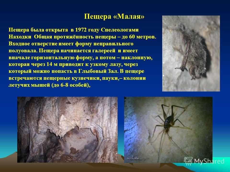 Пещера была открыта в 1972 году Спелеологами Находки Общая протяжённость пещеры – до 60 метров. Входное отверстие имеет форму неправильного полуовала. Пещера начинается галереей и имеет вначале горизонтальную форму, а потом – наклонную, которая через
